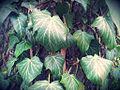 0005 Pflanze CC0 1.0.jpg