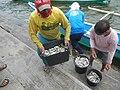 0016Hagonoy Fish Port River Bancas Birds 20.jpg