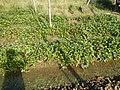 0581jfLandscapes Roads Vegetables Fields Binagbag Angat Bulacanfvf 19.JPG