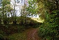 1066 Country Walk in the woods - geograph.org.uk - 1577348.jpg