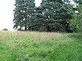 1937 Coronation plantation - geograph.org.uk - 1435590.jpg