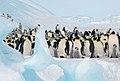 2007 Snow-Hill-Island Luyten-De-Hauwere-Emperor-Penguin-44.jpg