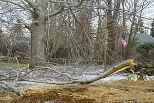 Damage from the ice storm of 12/12/2008.