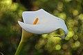 2011-03-05 03-13 Madeira 180 Monte, Jardim tropical Monte Palace.jpg