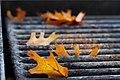 2011-365-320 Grilled Leaves (6352816218).jpg