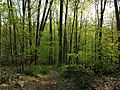 2013-05-06 18 37 35 View west along the Red Trail at YMCA Camp Bernie.jpg