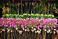 2013 Melbourne International Flower and Garden Show (8585115618).jpg