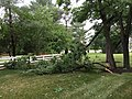 2015-06-18 19 33 13 Branches broken off of a Black Locust tree during a severe thunderstorm on Franklin Farm Road in the Franklin Farm section of Oak Hill, Virginia.jpg