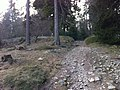 20150324-innerer Ringwall-Altkoenig-Taunus-Hessen-Deutschland.jpg