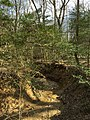 2016-03-01 14 21 22 View down a severely eroded tributary of Little Difficult Run within Fred Crabtree Park in Reston, Fairfax County, Virginia.jpg