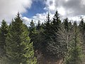 2019-10-27 11 56 56 View southeast across a Red Spruce forest from the observation tower on Spruce Knob in Pendleton County, West Virginia.jpg