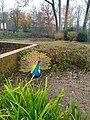2020-12-12-Hike-to-Rheydt-Palace-and-its-surroundings.-Foto-14.jpg