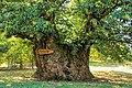 2020 The Chestnut Tree from Vales PT.jpg