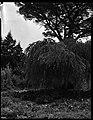 22.06.1964. Vue de la propriété. (1964) - 53Fi4703.jpg