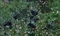 27.00212E 55.69292N Braslaw Lakes.png