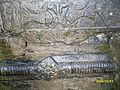 4- डोटी तल्लो बोगटान बर्छैन ७ रिसेडी गाउँको इतिहास फोटोले बोल्छ.jpg