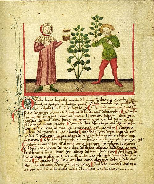 Erbario di Bergamo del 1441 (si noti la figura del medico tipicamente con un vasetto di vetro in mano)