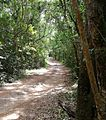 9 Road through indigenous forest - N Plettenberg Bay 3.jpg