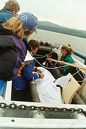 Killer whale wrapped in white cloth on a boat, surrounded by four people. A board braces its dorsal fin.