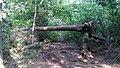 A fallen tree? (24990252408).jpg