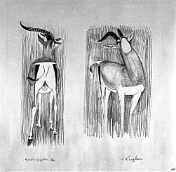 A gazelle (Grant's gazelle). Lithograph by Jonathan Kingdon. Wellcome L0024953.jpg