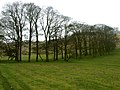 A small Wood in North Dale - geograph.org.uk - 1804244.jpg