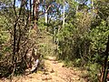 A walk in the park - panoramio.jpg
