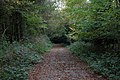 A walk through Twyford Wood, No 5 - geograph.org.uk - 272076.jpg