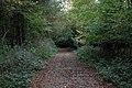 A walk through Twyford Wood, No 5 - geograph.org.uk - 272076.jpg