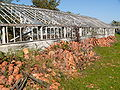 Abandoned greenhouses 4.jpg