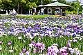 Aburagabuchi park.jpg