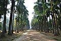 Acharya Jagadish Chandra Bose Indian Botanic Garden - Howrah 2011-01-08 9782.JPG