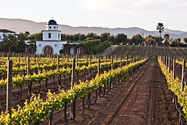 Adobe guadalupe winery 2.jpg