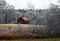 After an ice storm, Boxborough, Massachusetts, 2008.jpg