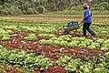 Agricultura familiar (16075907888).jpg