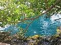 Aguas del Cenote Azul. - panoramio.jpg