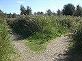 Alan Hersey Nature Reserve path fork.JPG