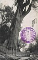Alishan Sacred Tree 1920.jpg
