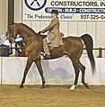 American Saddlebred15.jpg