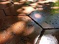 Ancien carrelage hexagonal bourguignon avec reflets.jpg