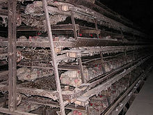 photograph of farm hens in battery cages