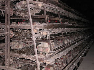 Veganism - Modern methods of factory farming are considered highly unethical by most vegans.