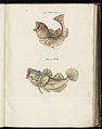Animal drawings collected by Felix Platter, p1 - (152).jpg