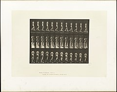 Animal locomotion. Plate 116 (Boston Public Library).jpg