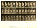 Animal locomotion. Plate 19 (Boston Public Library).jpg