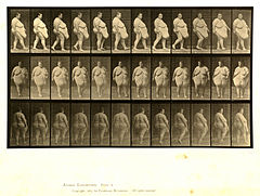 Animal locomotion. Plate 19 (Boston Public Library).jpg
