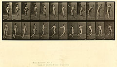 Animal locomotion. Plate 289 (Boston Public Library).jpg