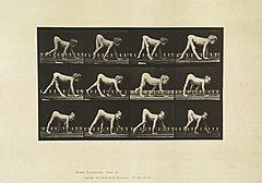 Animal locomotion. Plate 539 (Boston Public Library).jpg
