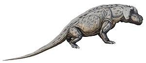 Tapinocephalus Assemblage Zone - Anteosaurus