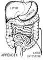 Appendix (PSF).png